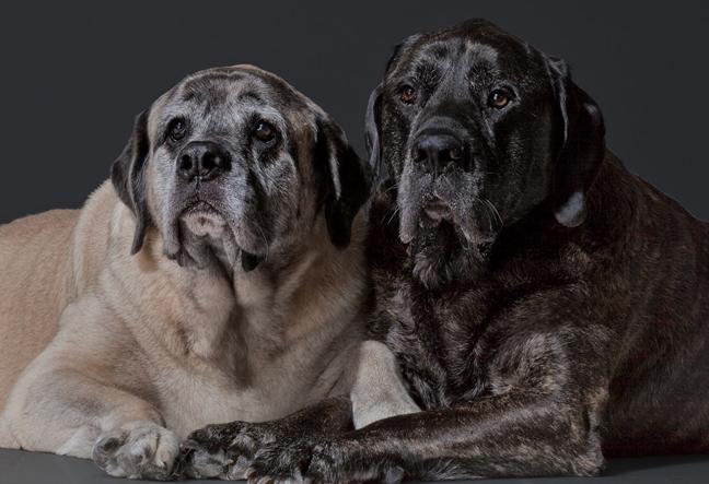 seniordogs